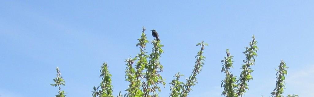 Living as free as a bird